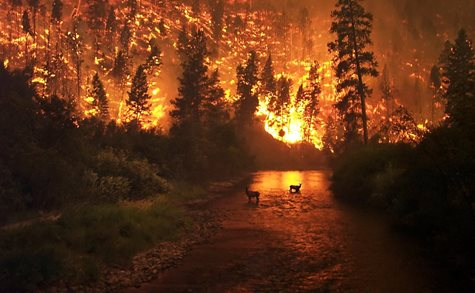 A Burning Forrest Behind Two Small Animals